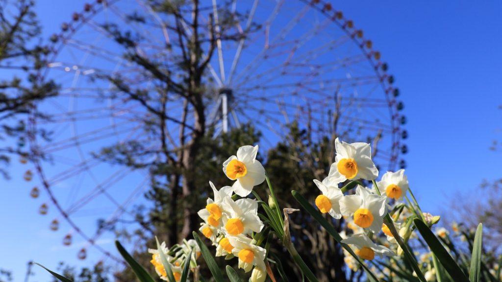 Panduan Tahunan untuk Melihat Bunga di Tokyo Bagian 1